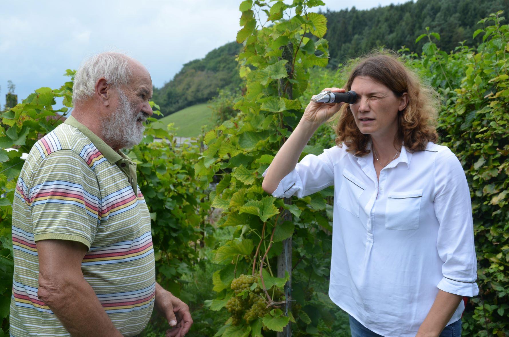 Ein Blick durch das Handrefraktometer: Landrätin Tanja Schweiger liest unter Anleitung von Weinbauer Franz Luttner die Öchsle-Werte ab. Der heurige Wein könnte gut werden.