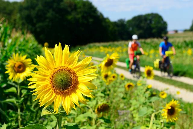 Unterwegs mit dem Fahrrad auf der Niederbayerntour im Landkreis Landshut