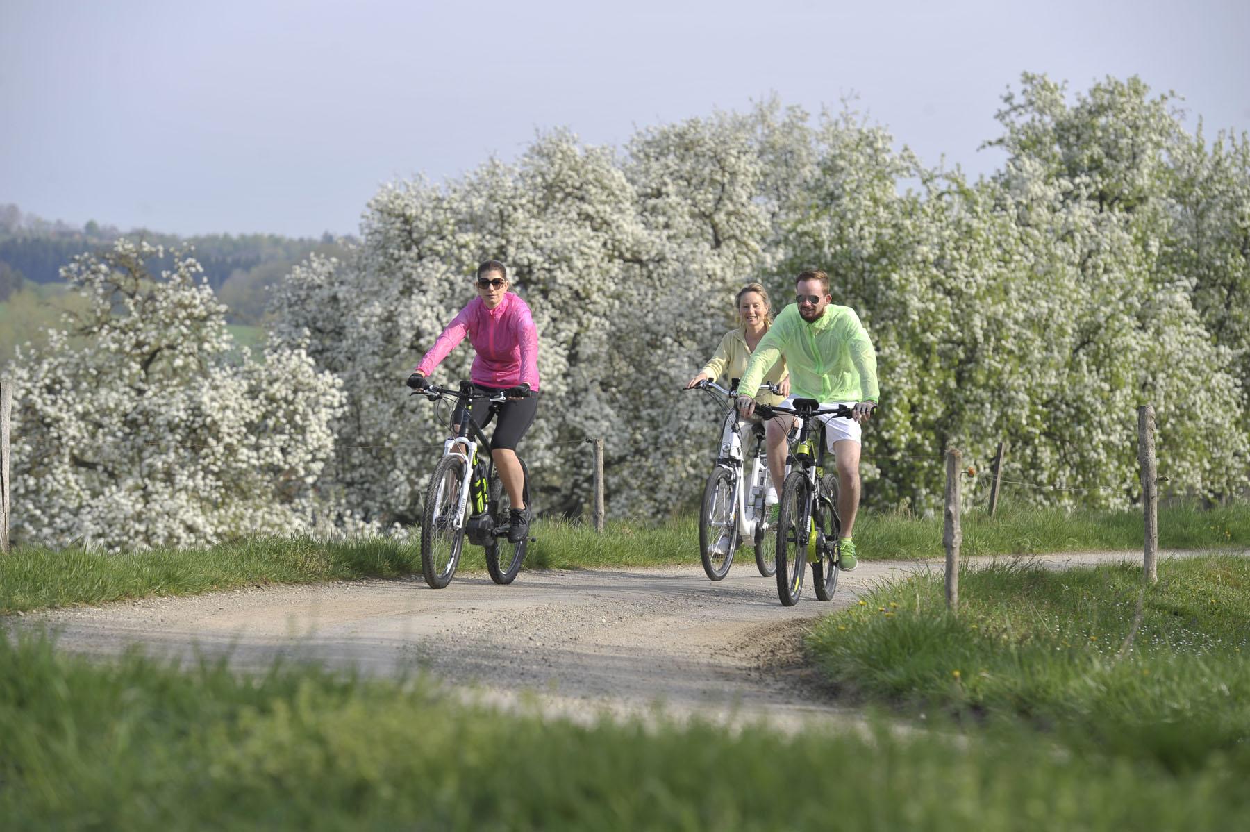 Ein Blütentraum auf dem Apfel-Radl-Weg