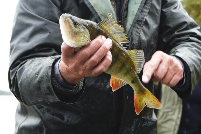 Die Donau ernährt seit vielen Generationen die Familie von Donaufischer Johann Mayer